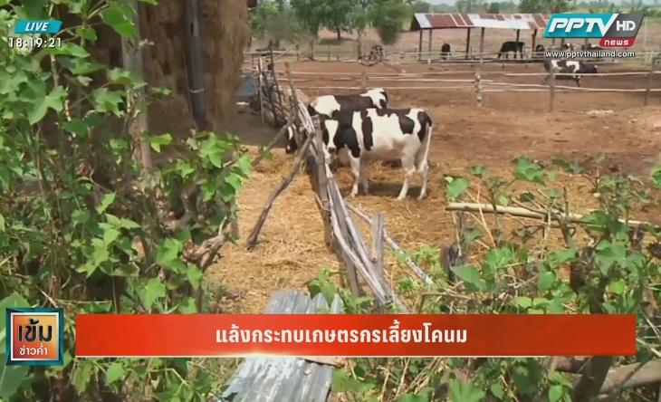 แล้งกระทบเกษตรกรเลี้ยงโคนม