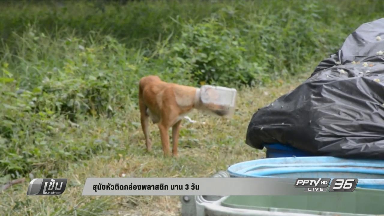 สุนัขหัวติดกล่องพลาสติก นาน 3 วัน