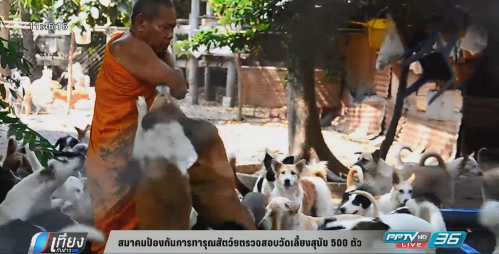 สมาคมป้องกันการทารุณสัตว์ฯ ตรวจสอบวัดเลี้ยงหมา 500  ตัว