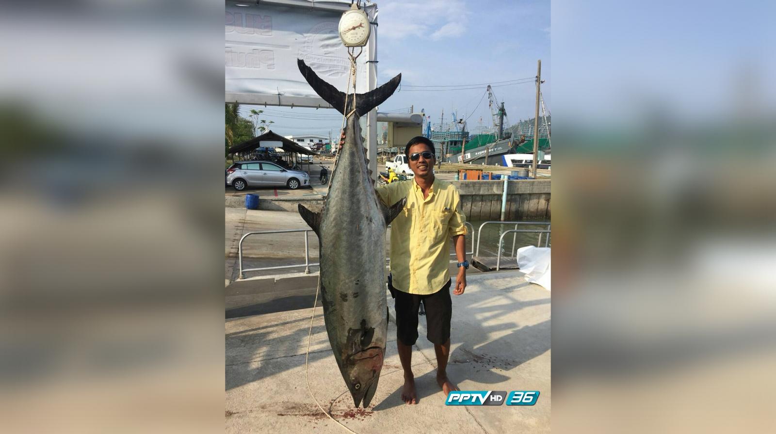 """นักตกปลาภูเก็ต ตก """"ปลาอินทรี"""" ใหญ่สุดในไทย อันดับสามของเอเชีย!"""