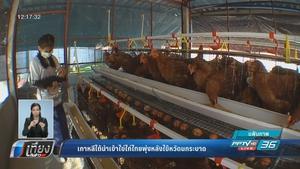 เกาหลีใต้นำเข้าไข่ไก่ไทยพุ่งสูง หลังไข้หวัดนกระบาด