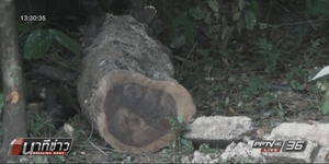 ชาวบ้านร้องสื่อพบแก๊งลอบตัดไม้พะยูง ตั้งข้อสังเกต ตร.อาจมีเอี่ยว