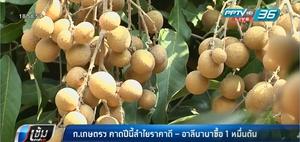 กระทรวงเกษตรฯ คาดปีนี้ลำไยราคาดี-อาลีบาบาซื้อ 1 หมื่นตัน