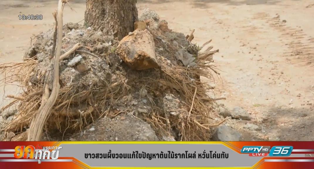 ชาวบ้านโวยต้นไม้ใหญ่ถูกปล่อยรากโผล่เสี่ยงอันตราย