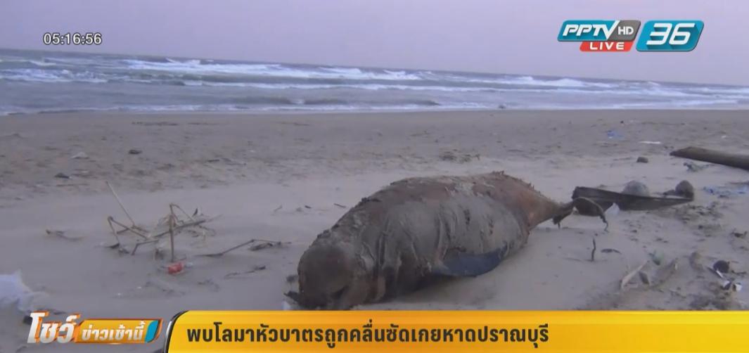 พบโลมาหัวบาตรถูกคลื่นซัดเกยหาดปราณบุรี