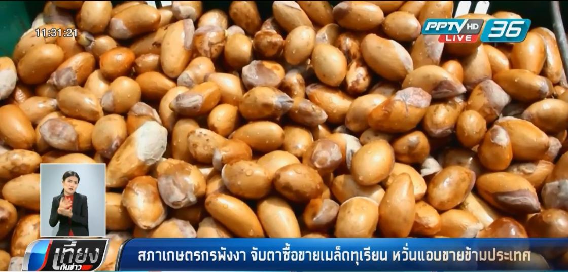 สภาเกษตรกรพังงา จับตาซื้อขายเมล็ดทุเรียน หวั่นแอบขายข้ามประเทศ