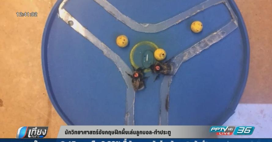 นักวิทยาศาสตร์อังกฤษฝึกผึ้งเล่นลูกบอล-ทำประตู