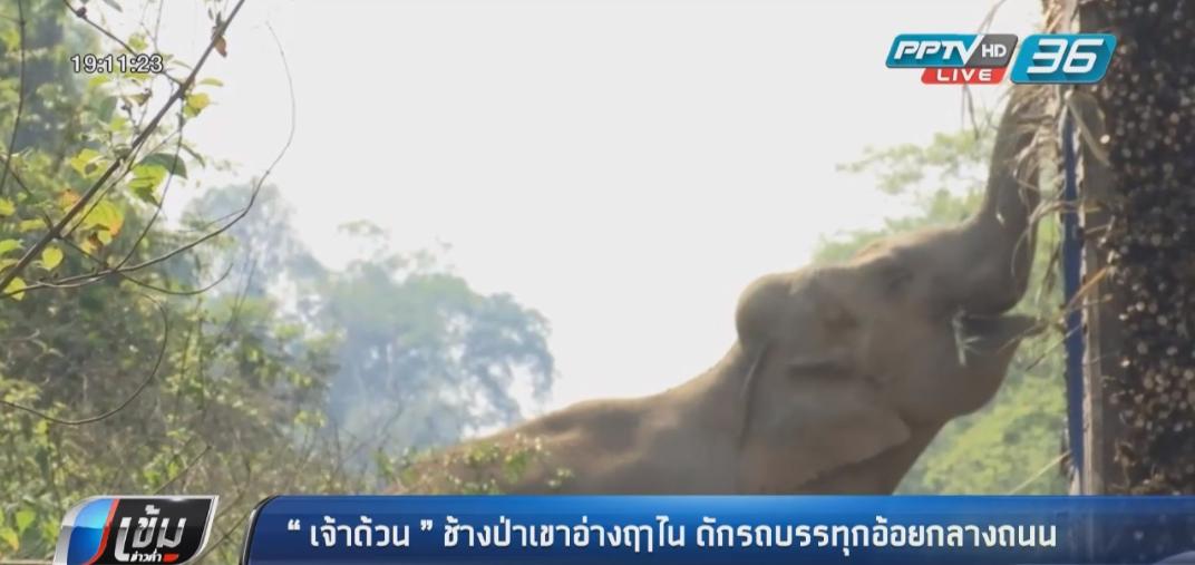 """""""เจ้าด้วน"""" ช้างป่าเขาอ่างฤาไน ดักรถบรรทุกอ้อยกลางถนน"""