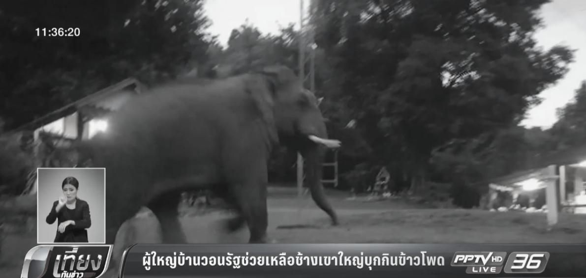 ผู้ใหญ่บ้านวอนรัฐช่วยเหลือช้างเขาใหญ่บุกกินข้าวโพด