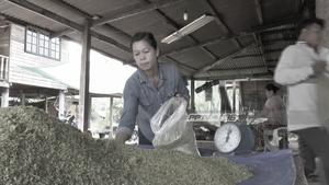 ชาวบ้านนครพนม ทำข้าวเม่าขายรับหน้าหนาว รายได้วันละแสน