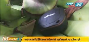 เกษตรกรติดจีพีเอสตามจับคนร้ายขโมยกล้วย จ.จันทบุรี