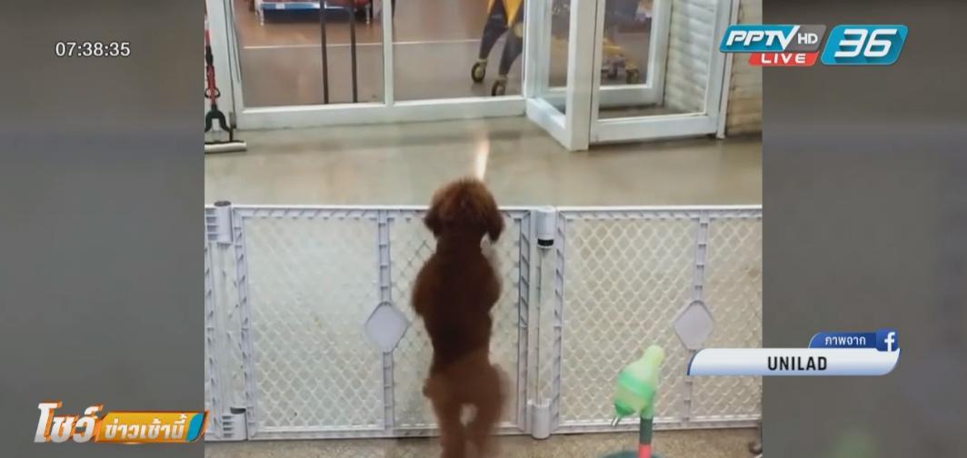 สุนัขดีใจเต้นสุดแรงเจอเจ้าของรับกลับบ้าน