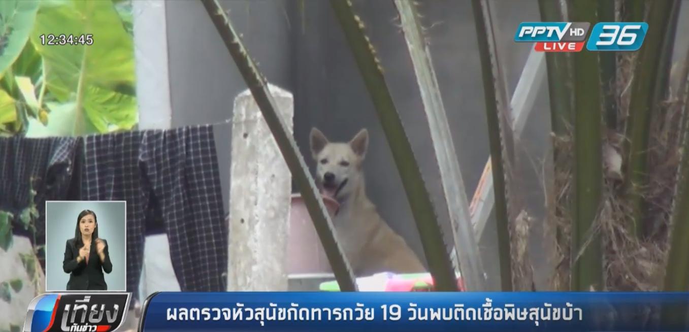"""ผลตรวจหัวสุนัขเมืองคอน กัดทารกวัย 19 วัน พบติดเชื้อ """"พิษสุนัขบ้า"""""""