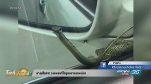 ตกใจ! งูเกาะข้างรถ ชาวเน็ตแนะขอเพลงไล่งู สวนกระแสของเพลงมีงู