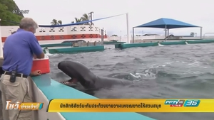 นักสิทธิสัตว์ประท้วงสวนสนุกซื้อวาฬเพชฌฆาตดำ