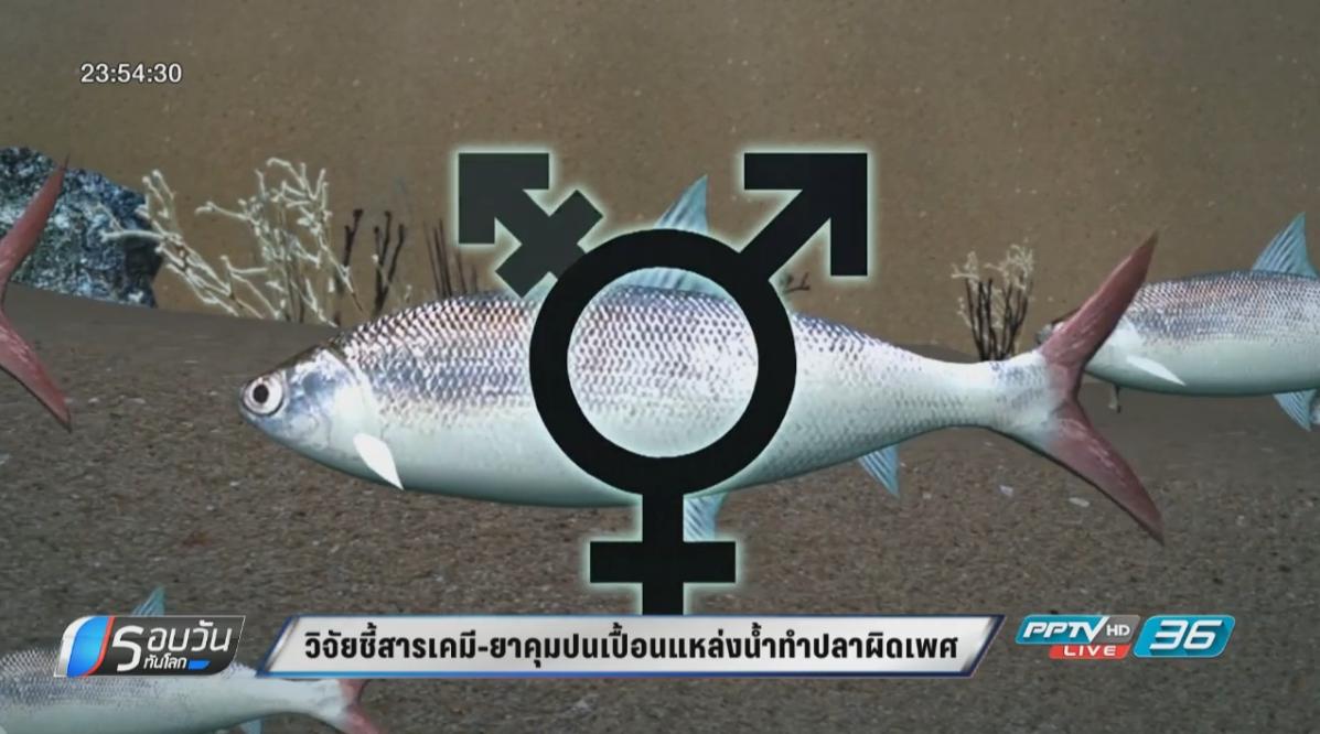 ผลวิจัย ชี้สารเคมี-ยาคุมปนเปื้อนแหล่งน้ำ ทำปลาผิดเพศ