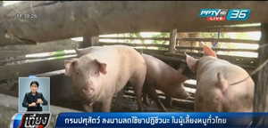 กรมปศุสัตว์ ลงนามลดใช้ยาปฏิชีวนะ ในผู้เลี้ยงหมูทั่วไทย