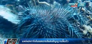 แหล่งปะการังในออสเตรเลียส่งสัญญาณฟื้นตัว
