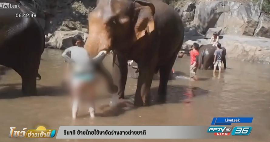 วินาที ช้างไทยใช้งางัดร่างสาวต่างชาติ (คลิป)