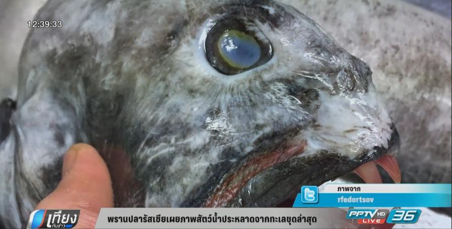 หนุ่มรัสเซียโชว์ภาพปลาหน้าตาประหลาดชุดล่าสุด