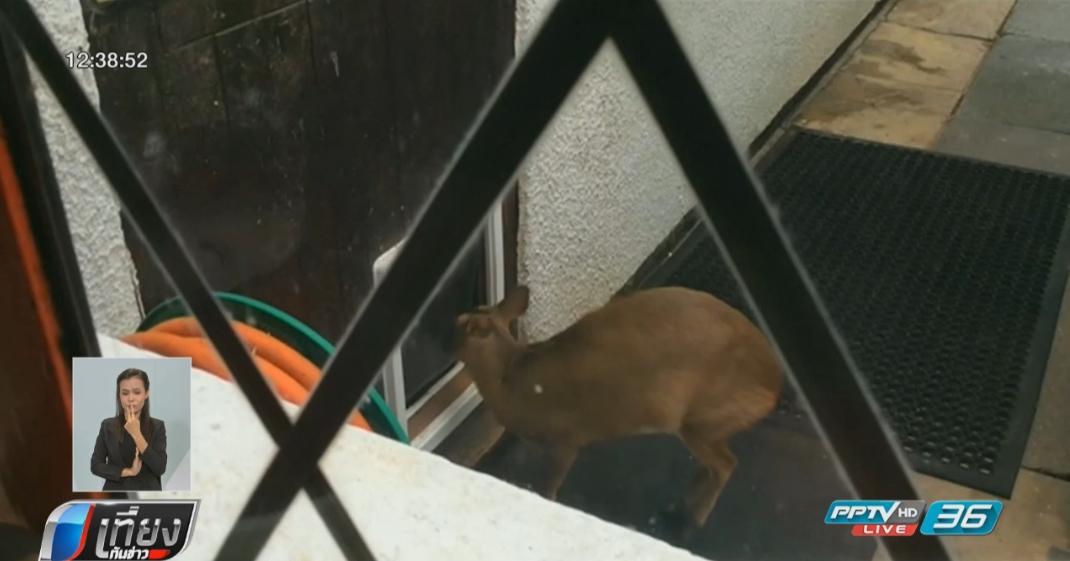 เก้งแสนรู้ฝึกใช้ประตูสุนัขเข้า-ออกบ้าน