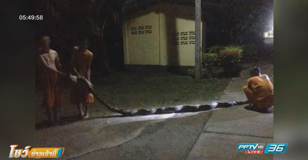 ระทึก! งูเหลือมรัดแม่ชีหวังเขมือบ พระช่วยรอดหวุดหวิด
