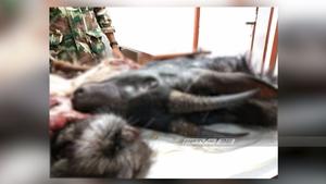 """ศาลเพชรบุรี อนุมัติหมายจับ 2 พ่อลูกชาวกะเหรี่ยง มือฆ่า """"เลียงผา"""""""
