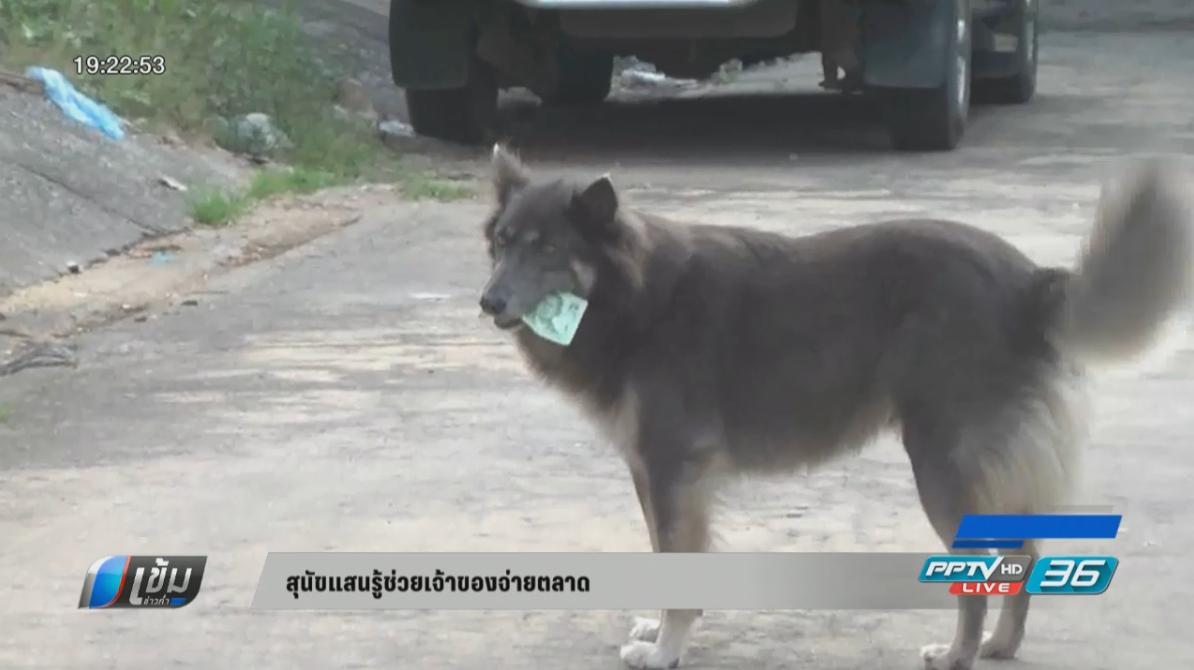 สุนัขแสนรู้ช่วยเจ้าของจ่ายตลาด