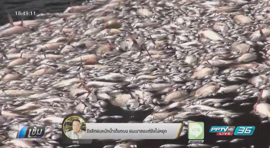 ปลาในสระบัวแหลมสมิหลาลอยตายนับหมื่นตัว