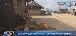 ปศุสัตว์เชียงรายประกาศพื้นที่ควบคุมเพิ่ม หลังพบสุนัขติดเชื้อพิษสุนัขบ้าแพร่ระบาด