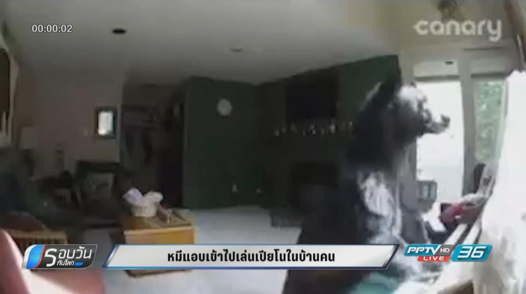 หมีแอบเข้ามาเล่นเปียโนในบ้านคน