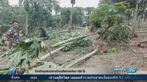 ช้างป่าบุกสวนชาวบ้านเสียหายเกือบ 100 ไร่