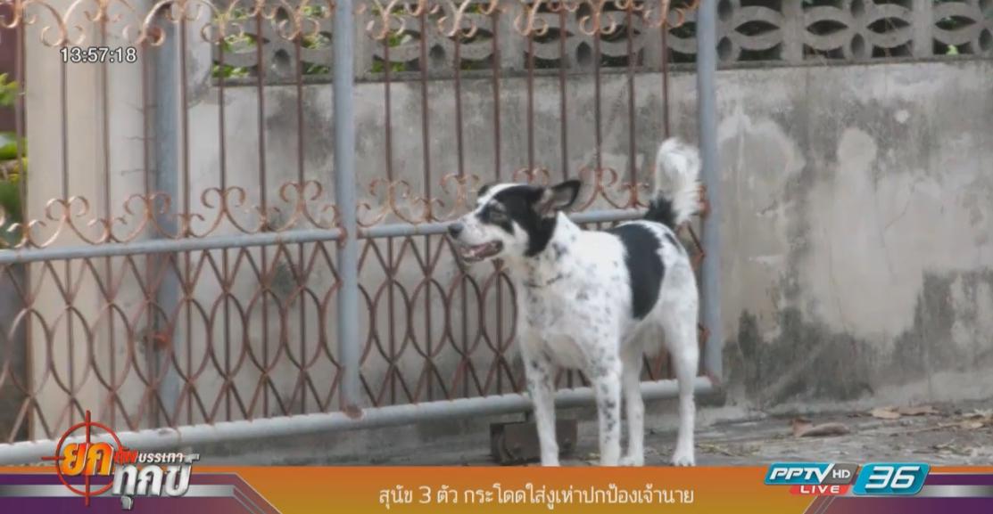 ซื่อสัตย์! สุนัข 3 ตัวกระโจนปกป้องเจ้านายจากงูเห่า