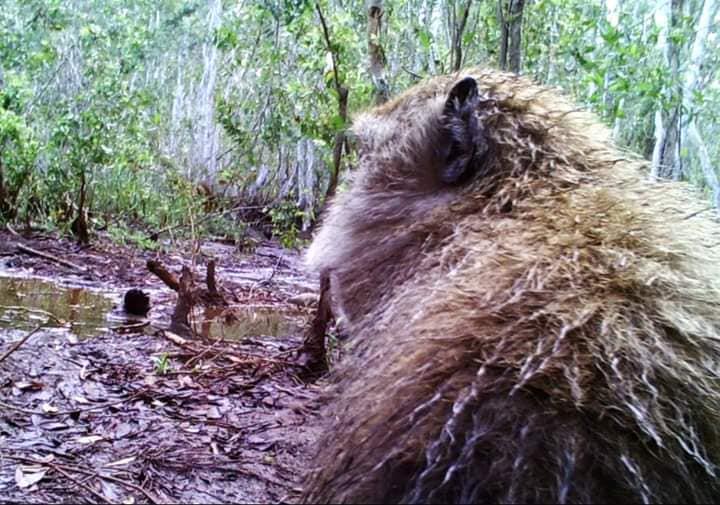 กรมอุทยานฯ เผยภาพ ลิงแสมขอออกกล้อง ชาวเน็ตแห่ชื่นชม