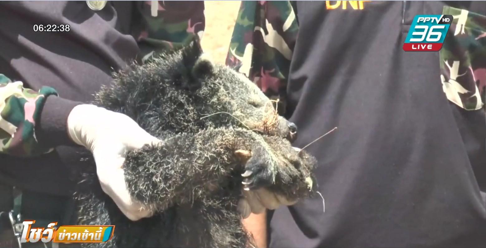 หมีขอหนีหมา ปีนขึ้นเสาไฟฟ้า ถูกไฟช็อตตาย