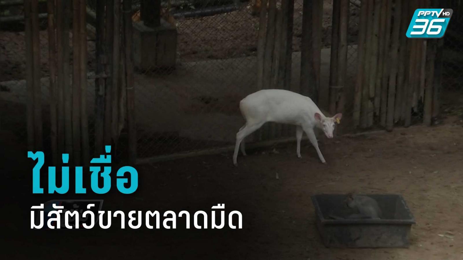 """สวนสัตว์เขาเขียว ไม่เชื่อมีสัตว์ในสวนสัตว์ หลุดขาย """"ตลาดมืด"""""""