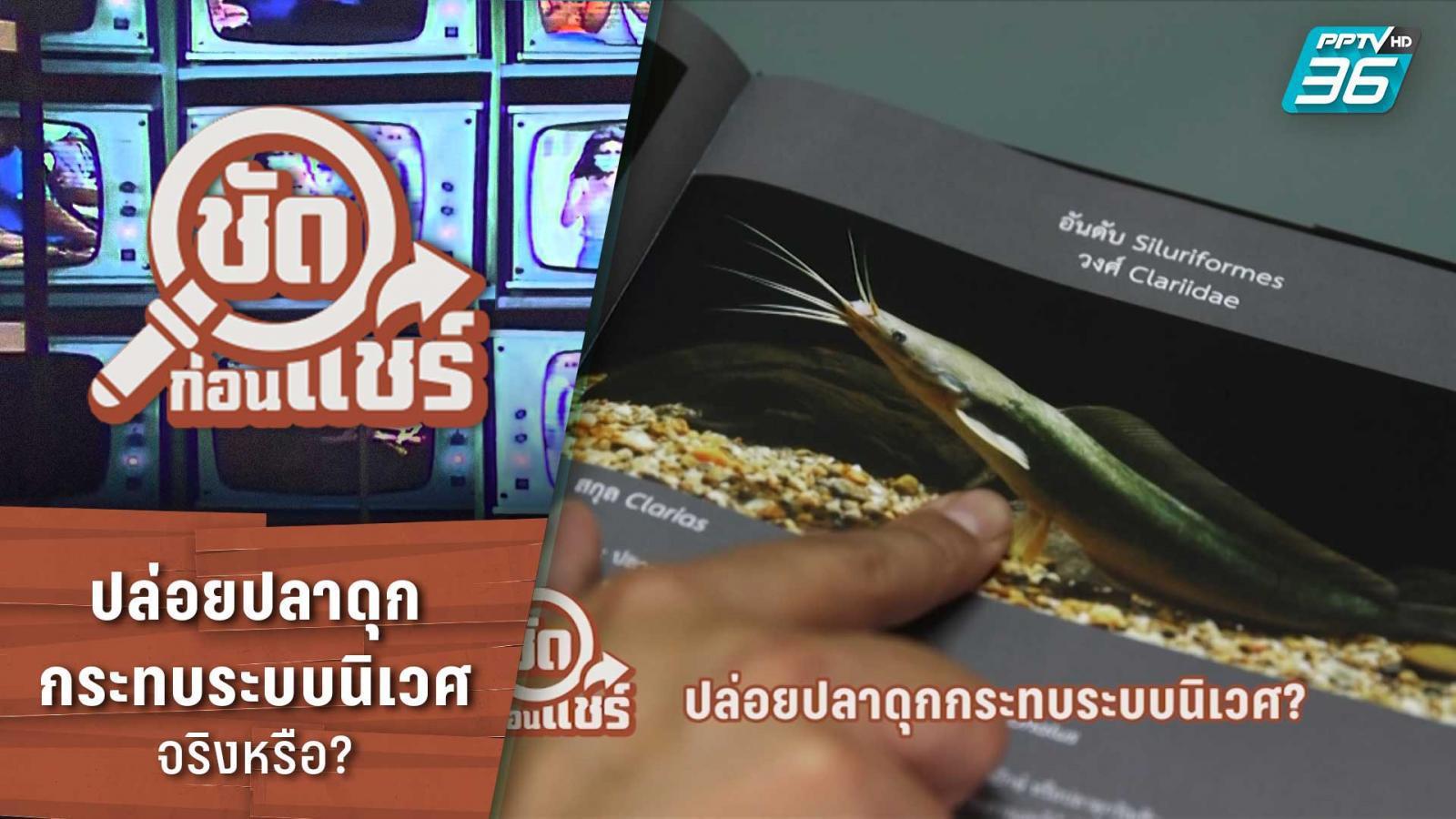 ชัดก่อนแชร์ | ปล่อยปลาดุกกระทบระบบนิเวศ จริงหรือ? | PPTV HD 36