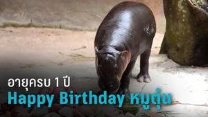 """ฉลองวันเกิด 1 ปี """"หมูตุ๋น"""" ฮิปโปแคระ ดาวเด่น แห่งสวนสัตว์เปิดเขาเขียว"""