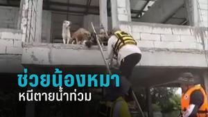 พี่กู้ภัยโคราช รุดช่วยน้องหมานับ 10 ตัวหนีตายน้ำท่วม