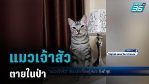 สาวโวย แมวหลุดจากบ้าน กู้ภัยจับได้ นำปล่อยป่า สุดท้ายตาย