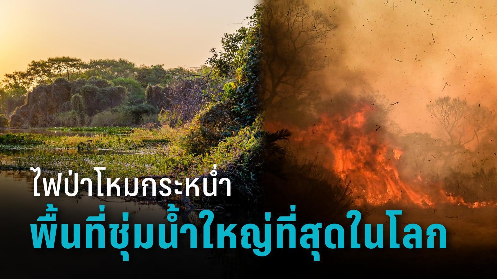 โลกร้อนขึ้นอีก เกิดไฟป่าในพื้นที่ชุ่มน้ำที่ใหญ่ที่สุดในโลก