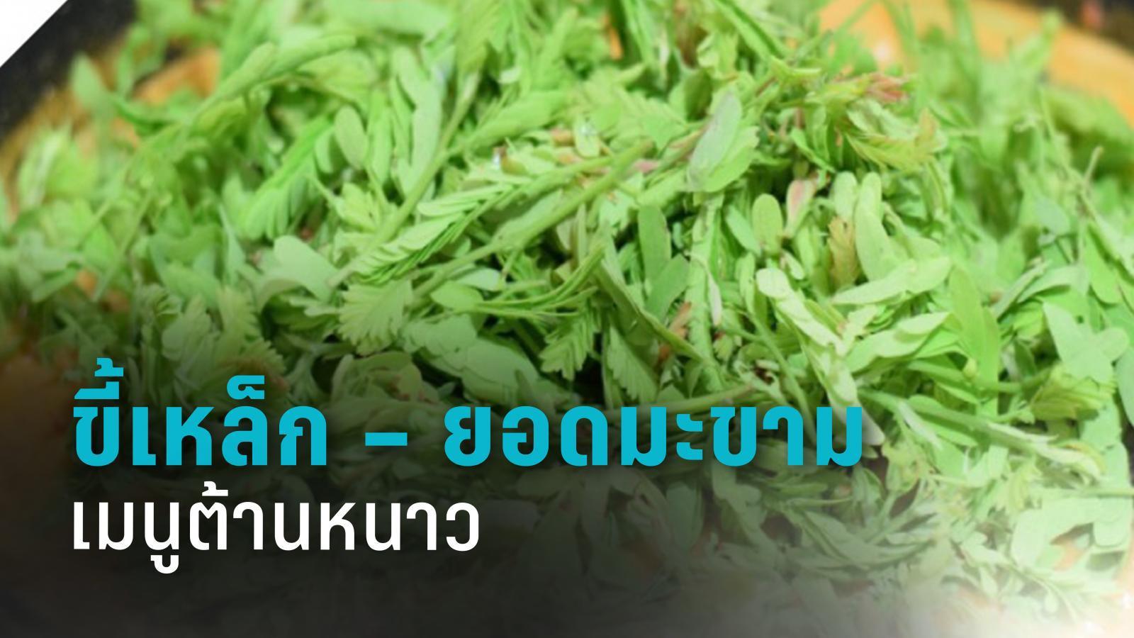 กรมอนามัย ชู ผักพื้นบ้าน 'ขี้เหล็ก – ยอดมะขาม'เมนูต้านหนาว
