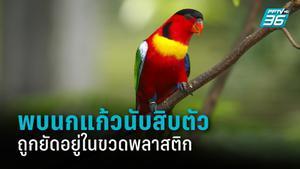 อินโดนีเซียพบนกแก้วถูกยัดใส่ขวดพลาสติกนับสิบ เชื่อเป็นของแก๊งค้าสัตว์ป่า