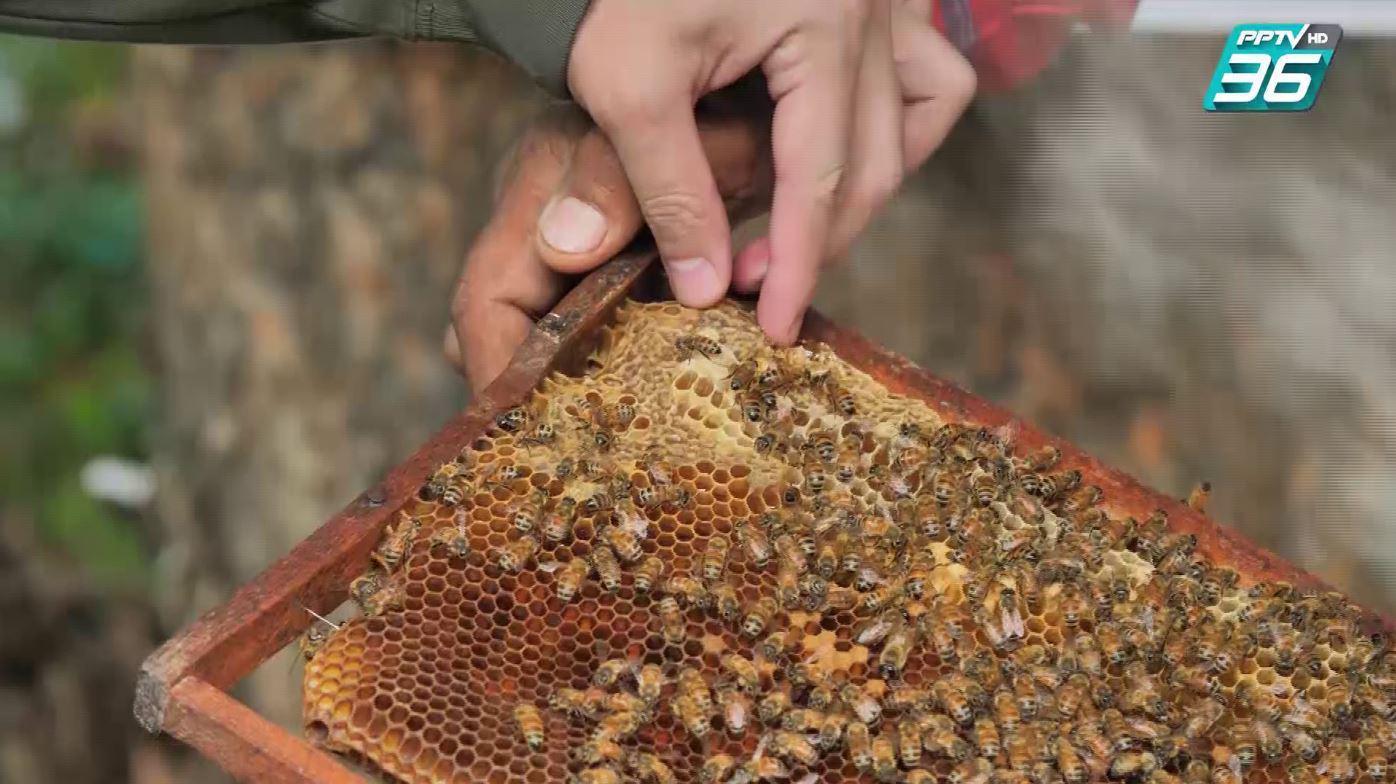 ฮั่น อิสริยะ | ตามสัญญา EP.53 | เคาะรังผึ้งแตกกระเจิง! ตามหานางพญา