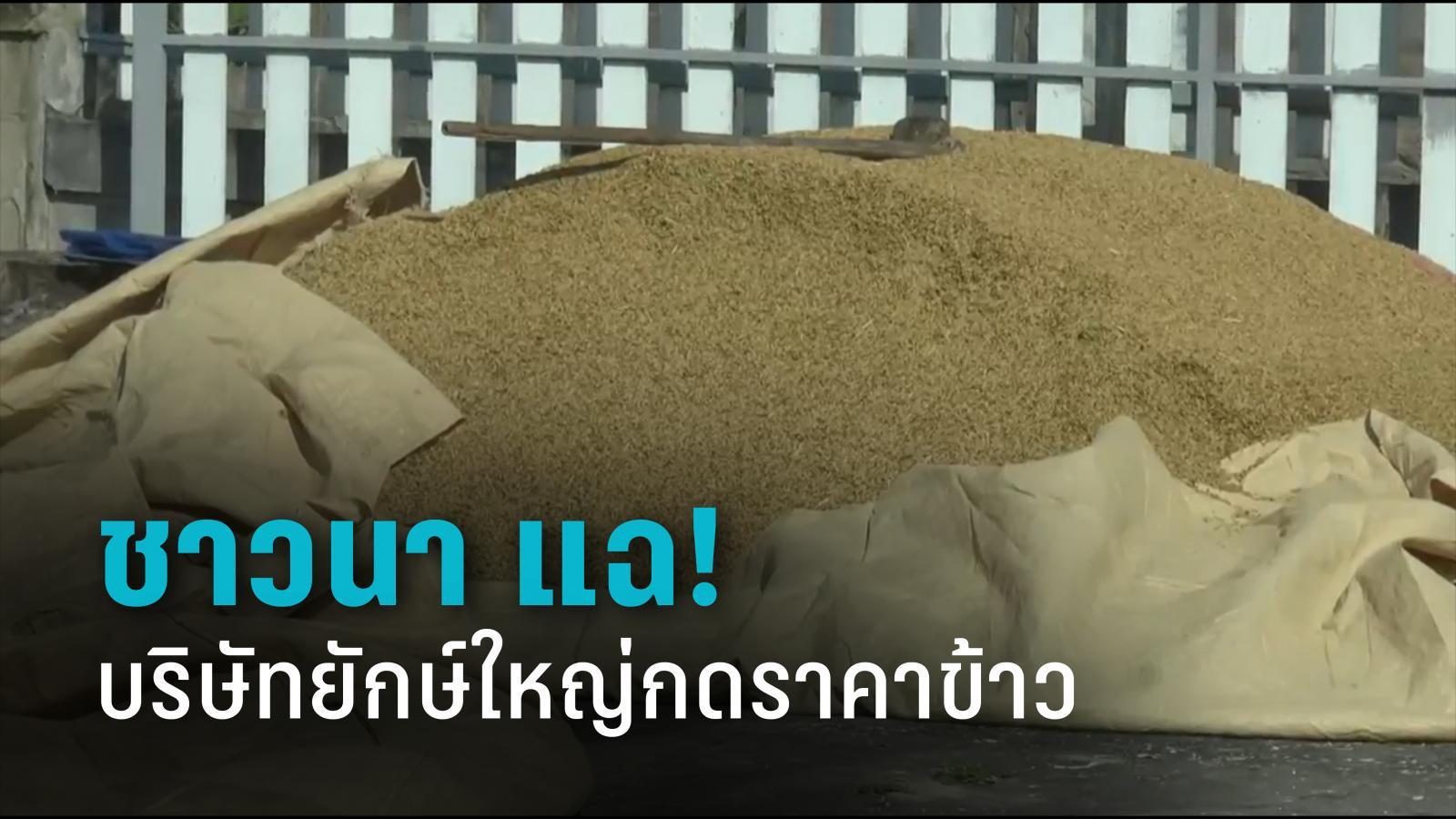 ชาวนา แฉ! บริษัทยักษ์ใหญ่กดราคาข้าว จนเกษตรกรขาดทุนยับ