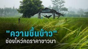 วงจรชาวนาไทย ปัญหาความชื้น หาที่ตากข้าวไม่ได้   กลายเป็น ช่องโหว่ให้ถูกกดราคา