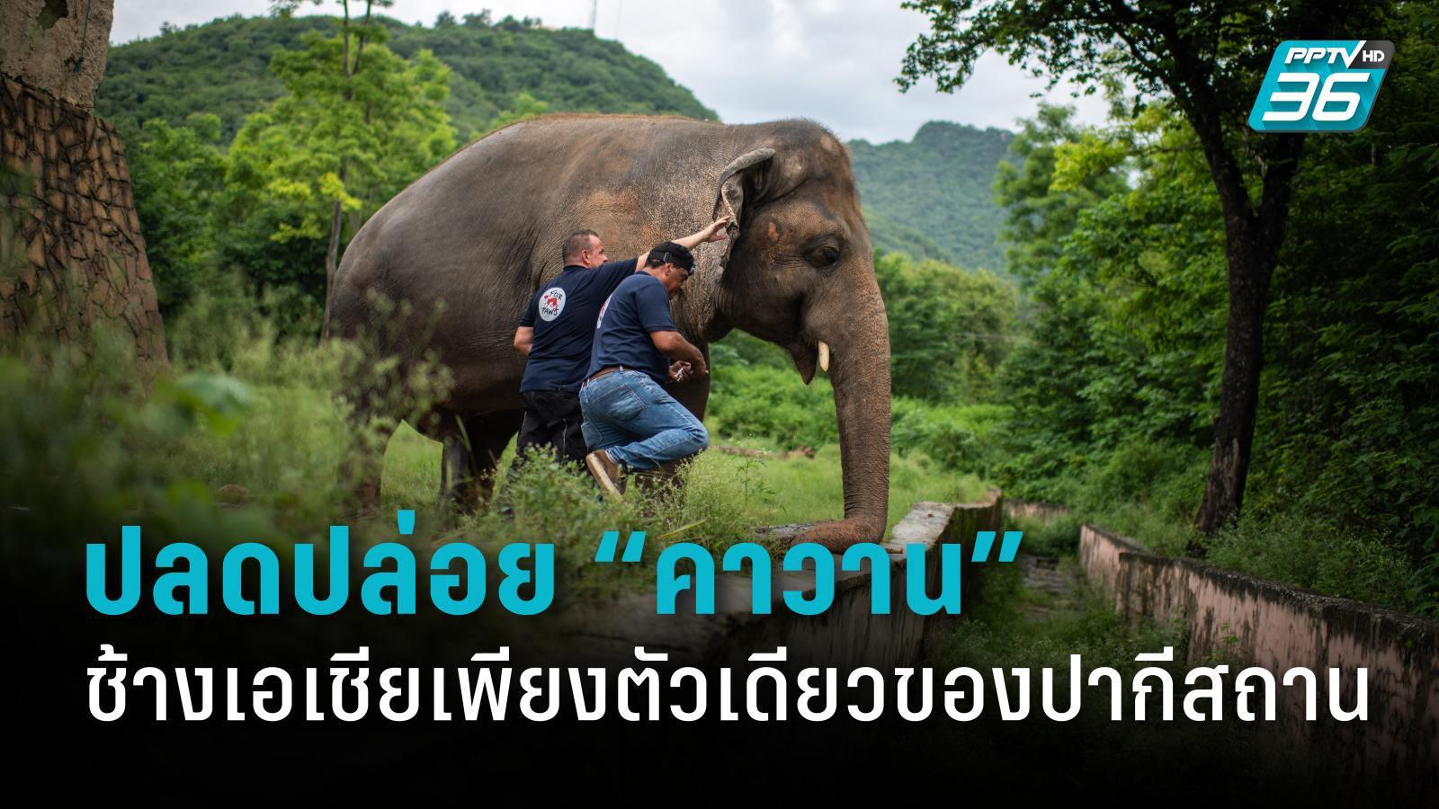 ช้างที่เดียวดายที่สุดในโลก ได้รับอิสรภาพจากสวนสัตว์แล้ว