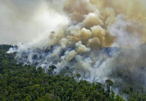 ป่าแอมะซอนของบราซิลถูกทำลายมากที่สุดในรอบ 12 ปี