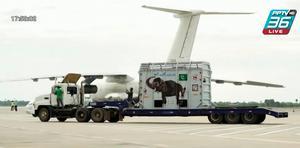ช้างผู้โดดเดี่ยวจากปากีสถานเริ่มชีวิตใหม่ในผืนป่ากัมพูชา