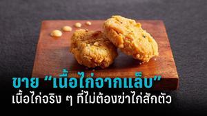 """ที่แรกในโลก สิงคโปร์ประกาศเตรียมวางขาย """"เนื้อไก่จากแล็บ"""""""